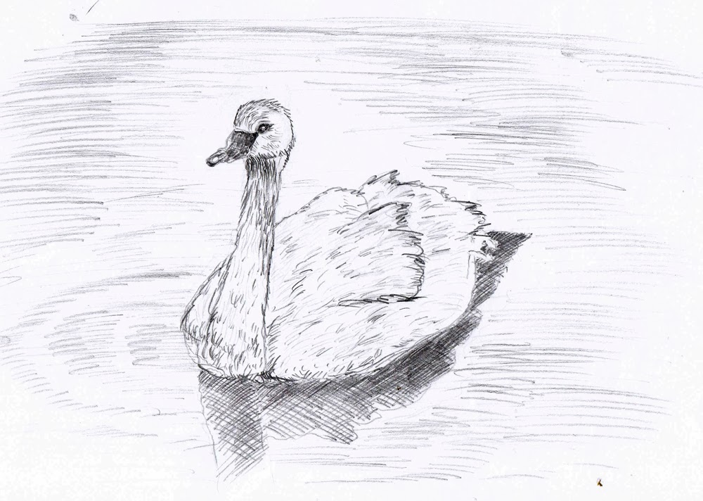 this swan was not an easy draw for me after just few lines through i decided to give up but then i thought a lesson is a lesson so i should do