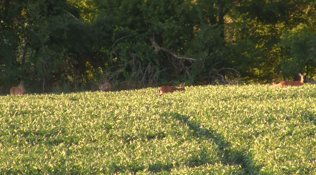 Macro-scouting whitetail deer in southern Wisconsin.