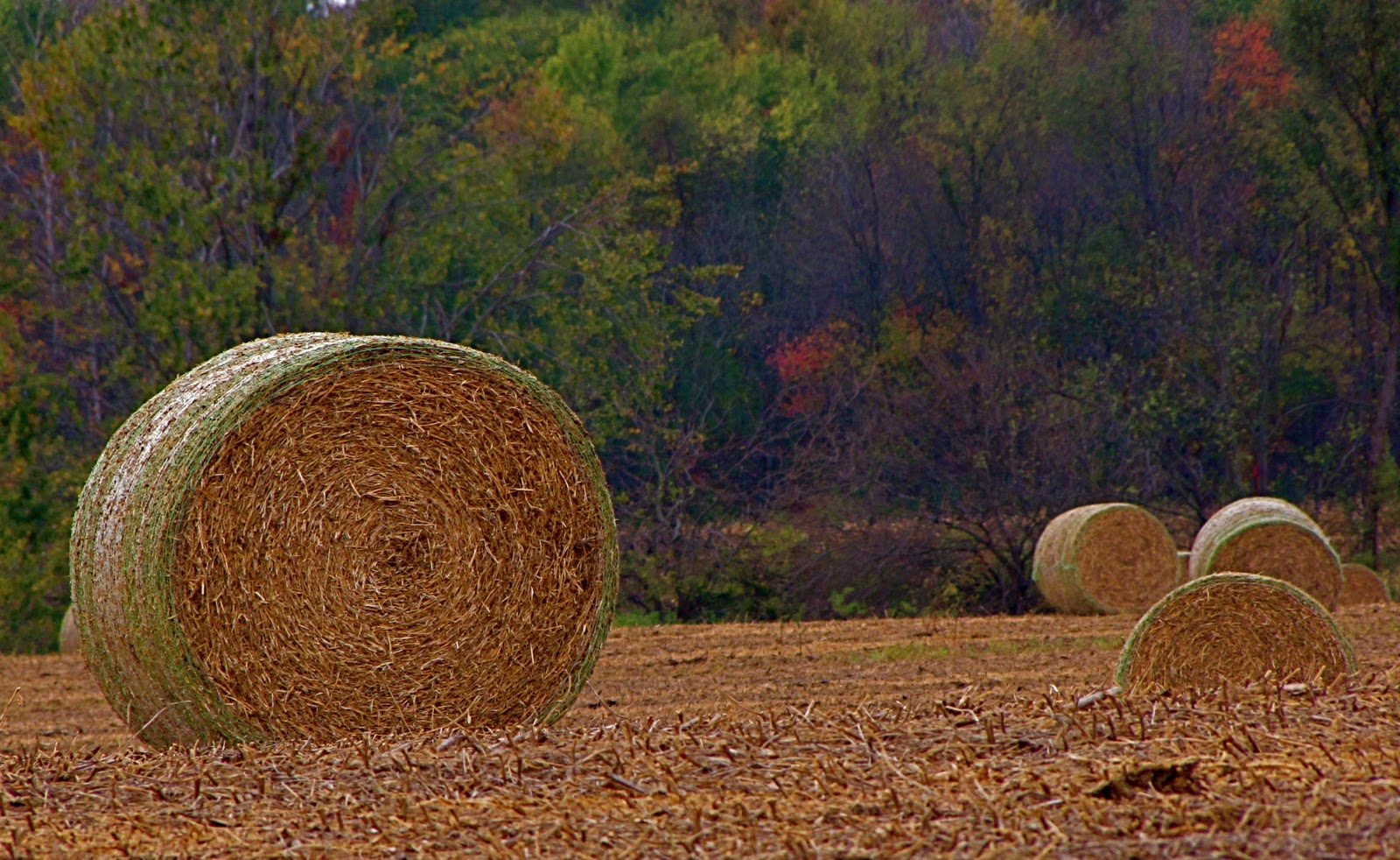 hurrahing in harvest