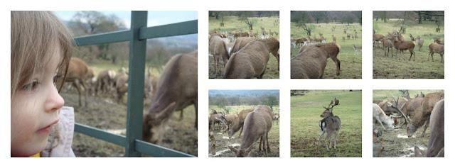 Reindeer Feed