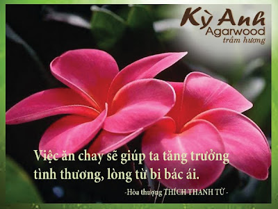 Danh ngon cua hoa thuong Thich Thanh Tu