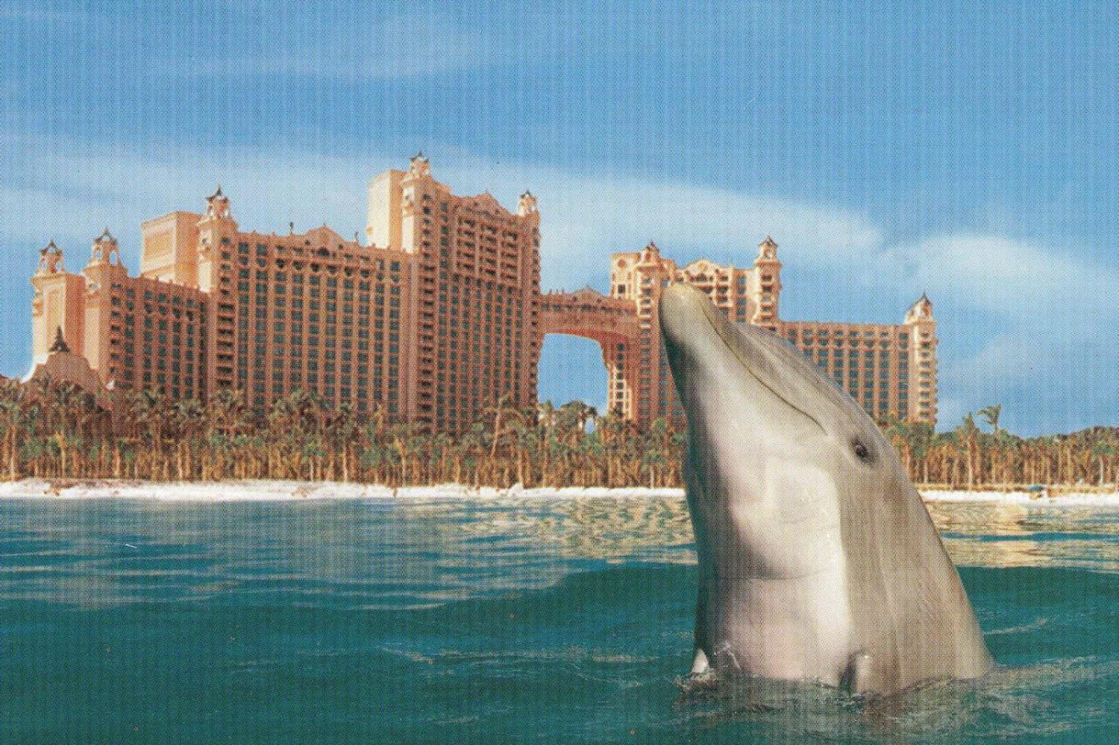Bobby Romano Blogs 39 Big Break Atlantis 39 I M Hooked