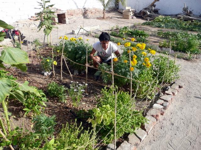 Jard n comunitario encinas taller de jardiner a org nica - Todo sobre jardineria ...