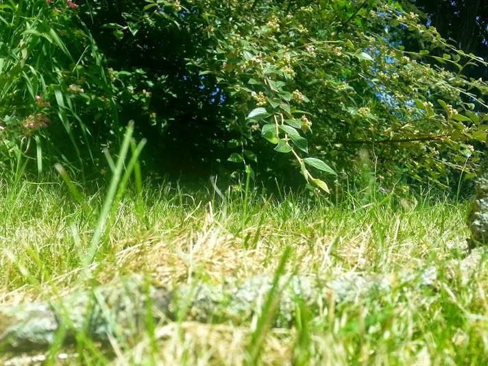 Barny Bear's Little Adventure - Rabbit height view of hole in undergrowth garden