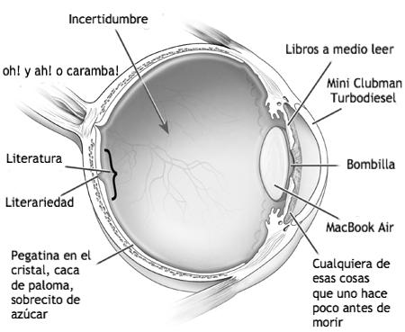 gluts: anatomía de un ojo izquierdo llamado Danilo T. Brown