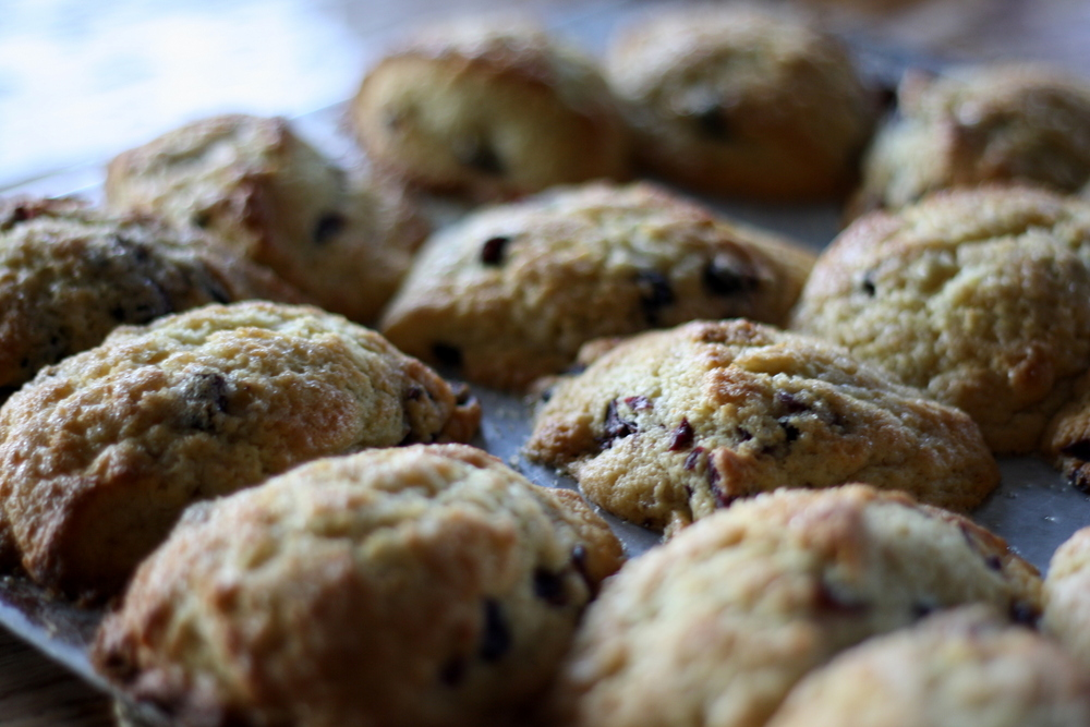 Jennifer Murch: cornmeal blueberry scones