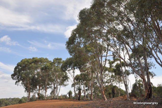 Aussie Bush, Toodyay, Western Australia