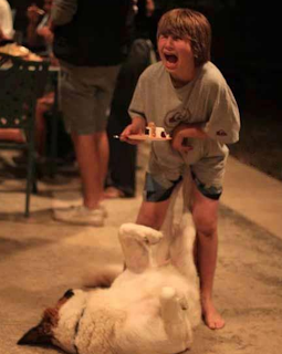 funny picture: dog playing with child