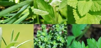 حقائق واكتشافات مهمة مرادفات الأعشاب الشرقية باللهجة المغربية Plants