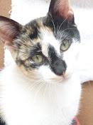 Nuestro gatitoo!:)