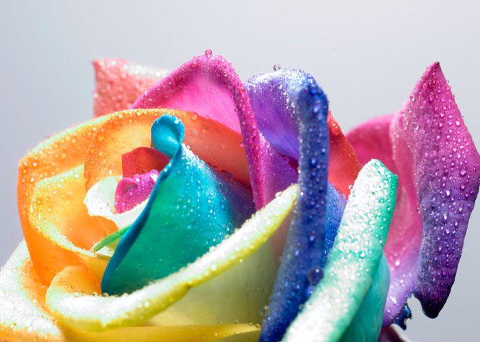 I fiori modi di dire proverbi e linguaggio una for I fiori della balsamina
