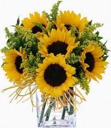 Ηλίανθοι www.anthemionflowers.gr