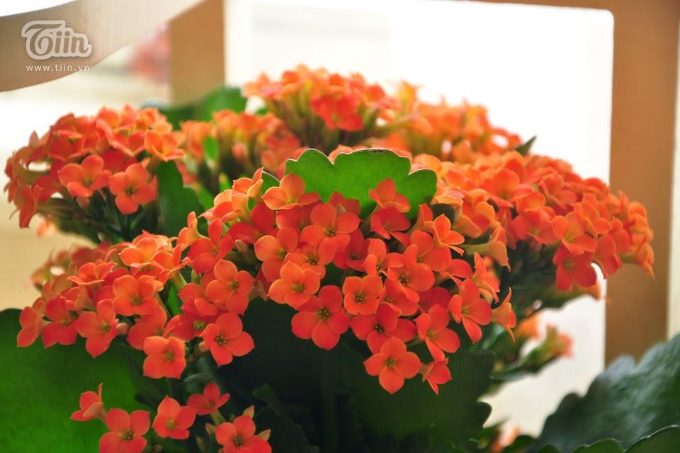 Dalat Flower