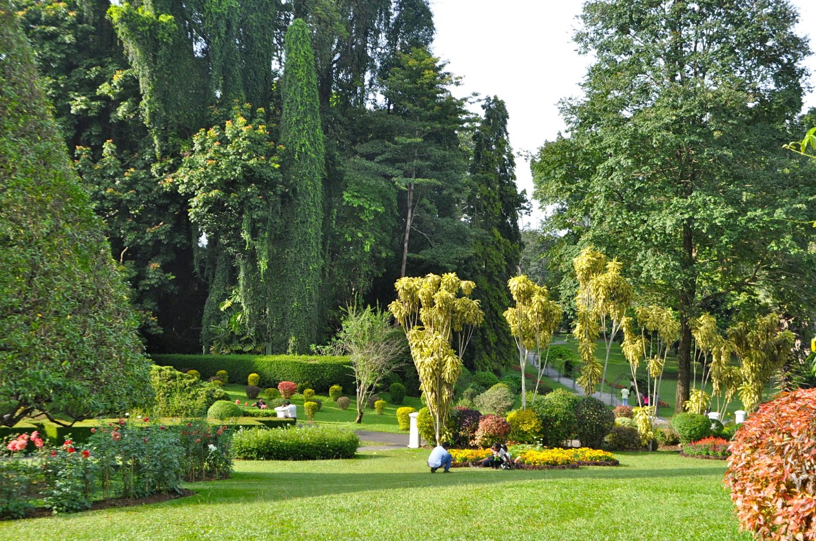 Art of the garden royal botanical garden peradeniya sri for Garden pictures