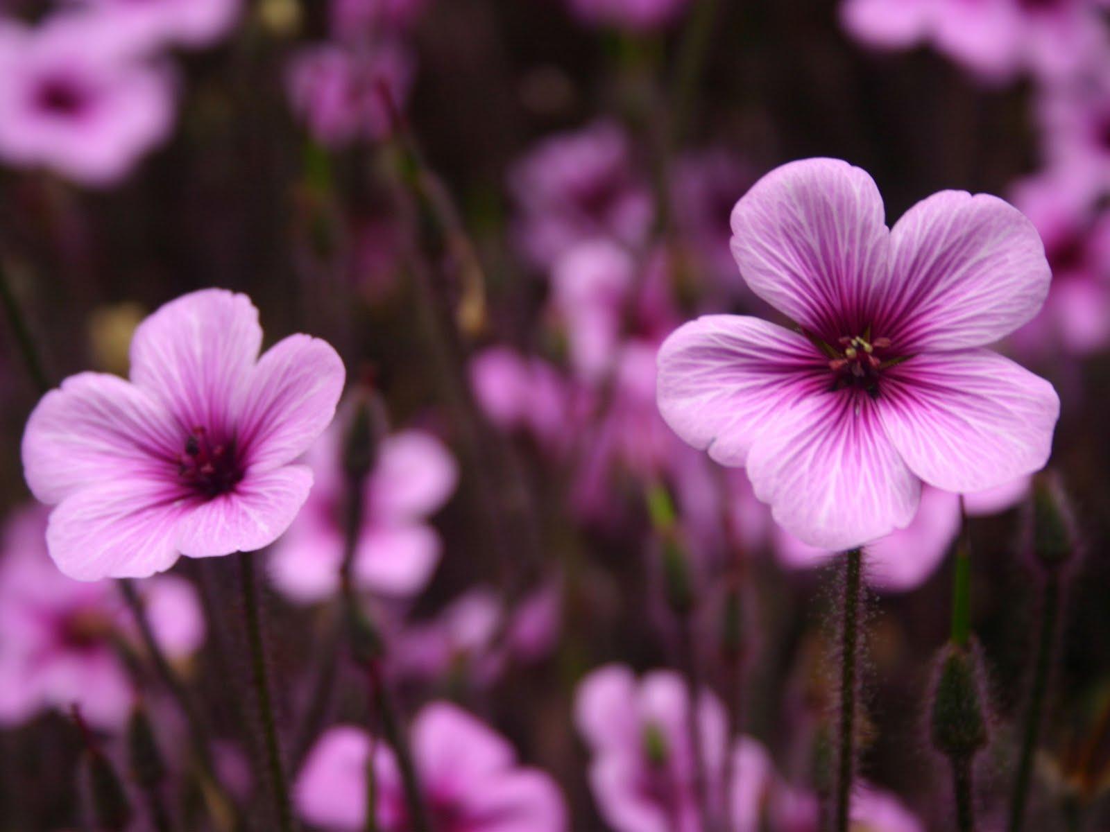 Little purple flowers background wallpapers purple background little purple flowers background wallpapers mightylinksfo