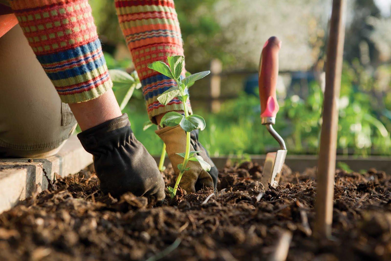 Salatalık yetiştiriciliğinin özellikleri karınca