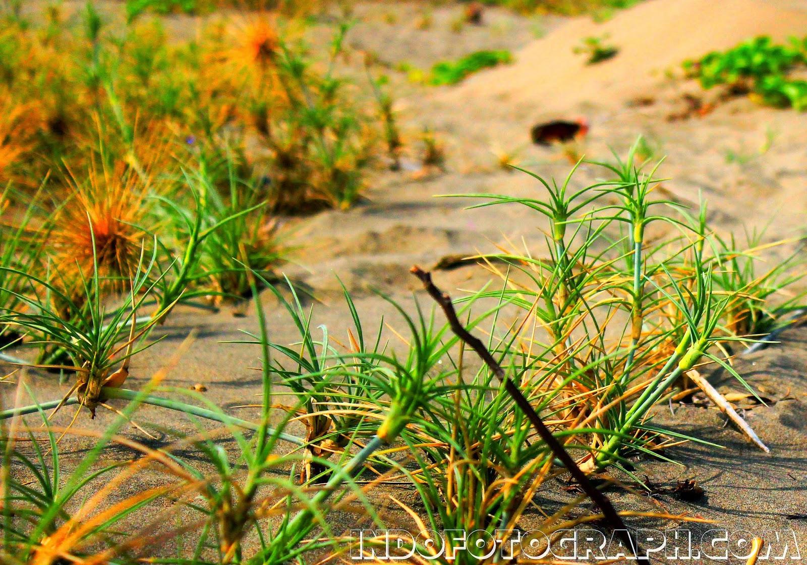 Contoh Hasil Foto Dari Jepretan Kamera DSLR CANON EOS 600D