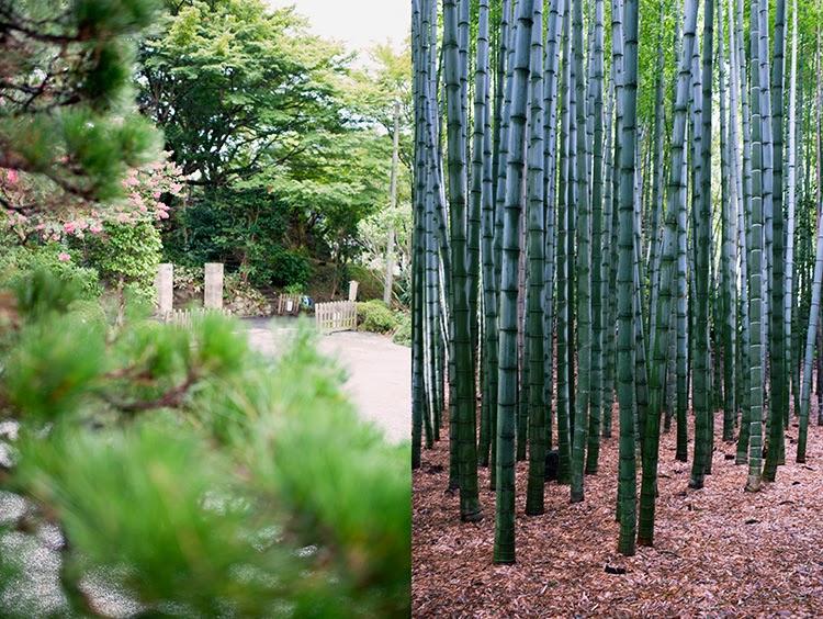 bamboo garden visit_Tokyo Japan