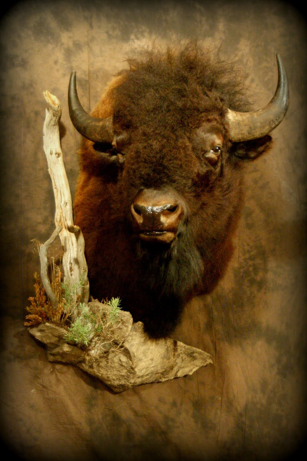 Taxidermy By Josh Hunt Bison Caribou And Moose