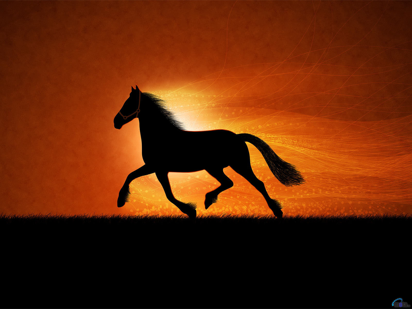 Top   Wallpaper Horse Yellow - american-horse  Best Photo Reference_661094.jpg