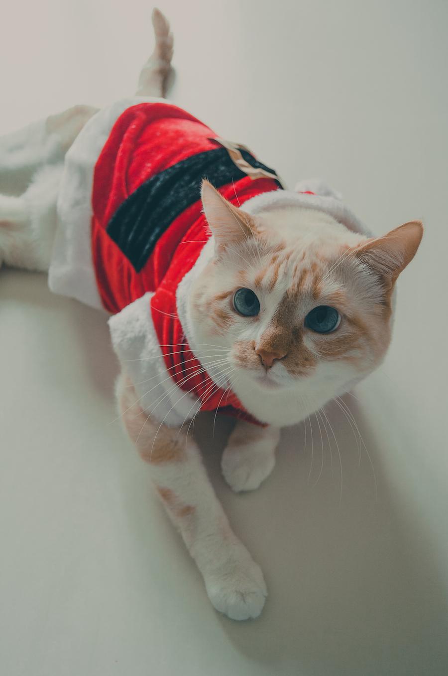 Mi gato de Papa Noel