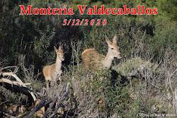 MONTERÍA VALDECABALLOS 5/12/2020