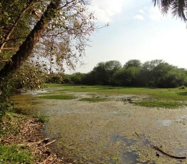 keoladeo marecage zone humide parc oiseau bird sanctuary bharatpur inde