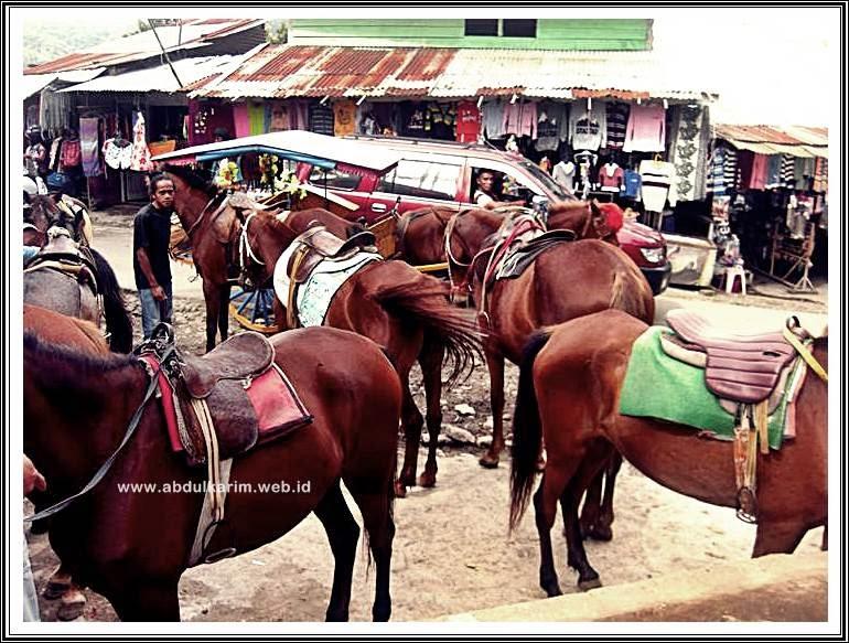Kuda Di Bukit Gundaling