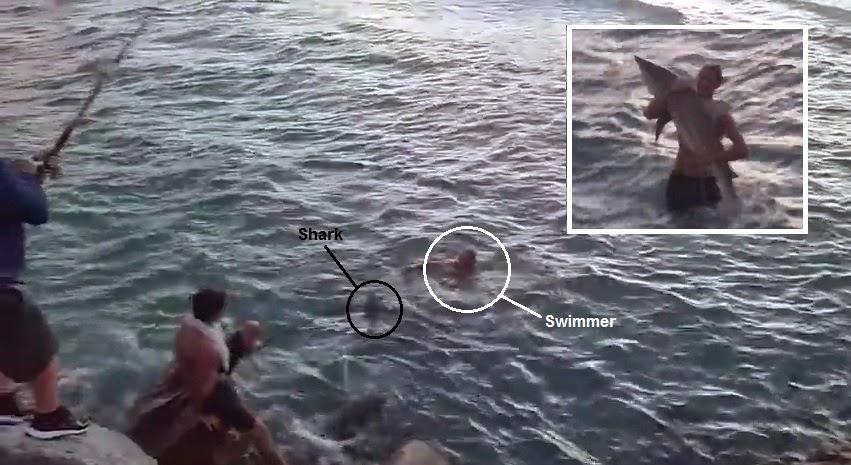 австралийские рыболовы выловили огромную акулу людоедку