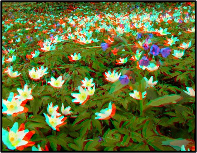 Šumsko cveće