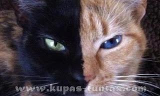Venus si Kucing Misterius - [www.kupas-tuntas.com]