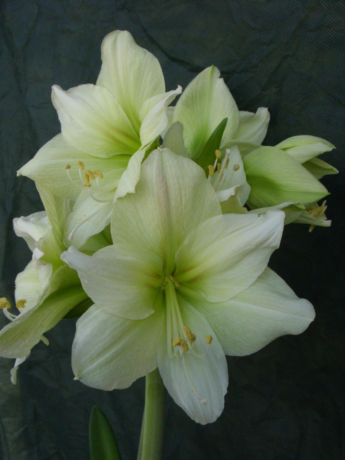 Immagini mazzi di fiori bellissimi - Immagini di fiori tedeschi ...