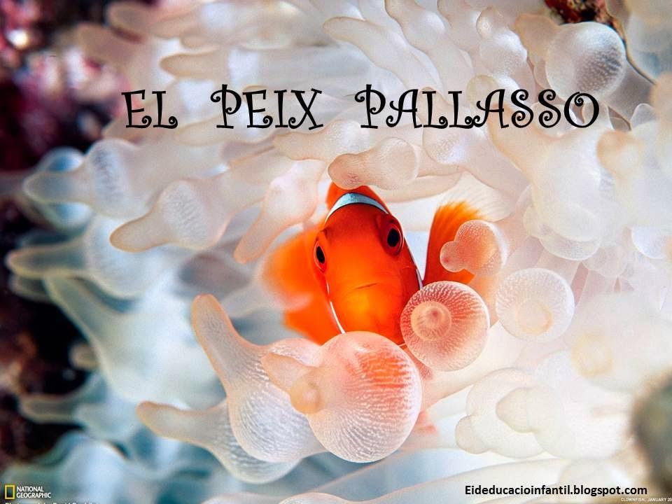 EL PEIX PALLASSO