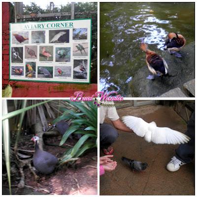 Tempat Menarik Di Melaka. Taman Buaya Ayer Keroh Melaka. Harga Tiket Taman Buaya Melaka. Tarikan Terkini Taman Buaya. Best Ke Taman Buaya? Apa Yang Ada Di Taman Buaya Melaka.