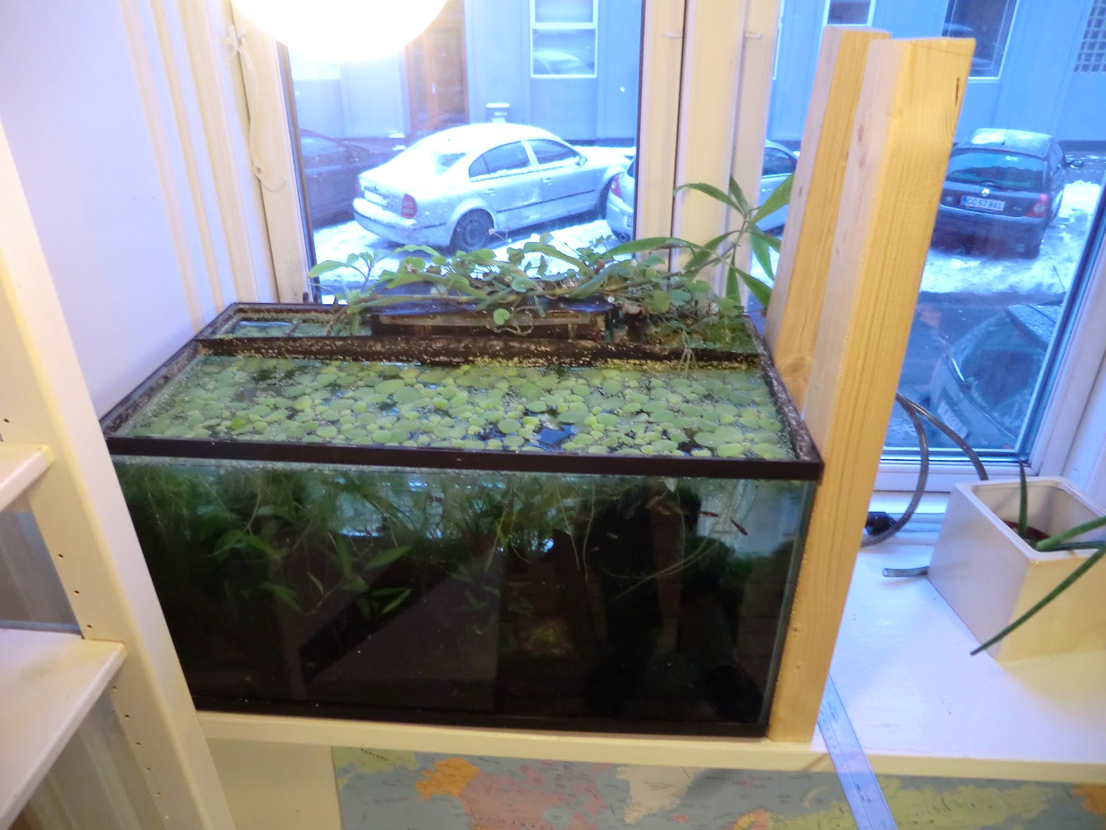 The fishtank aquaponics 7 retrofitting a pump to fit a for How to grow hydro in a fish tank