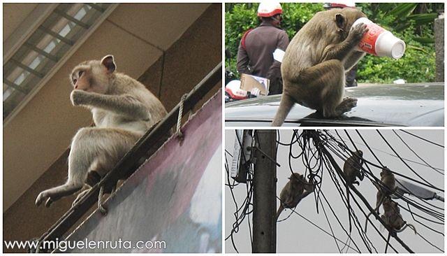 Macacos-Lopburi-Tailandia