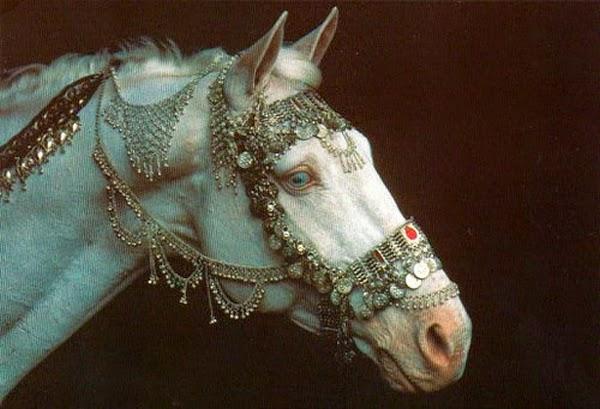 Лошадь — это поэзия в движении (20 фото)