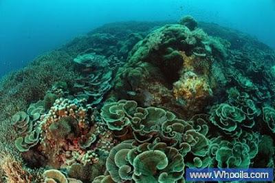 005+DSC 1236 2+ +Whooila.com Foto/Gambar Pemandangan Indah dibawah Laut Pulau Anambas