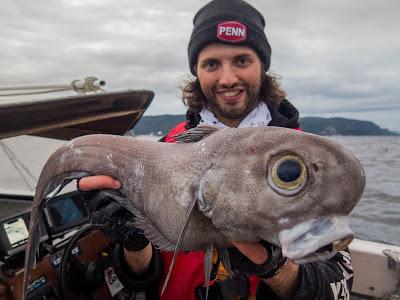 verdens største torsk