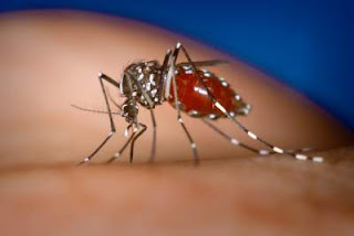 Chikungunya-causes-symptoms-treatment-Hindi