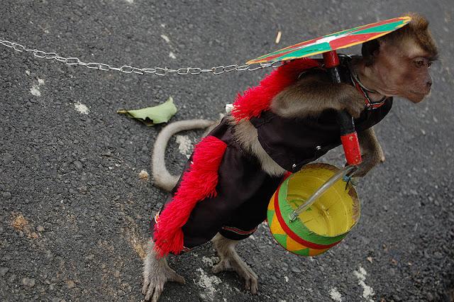 Topeng Monyet, Aktrasi yang menyiksa