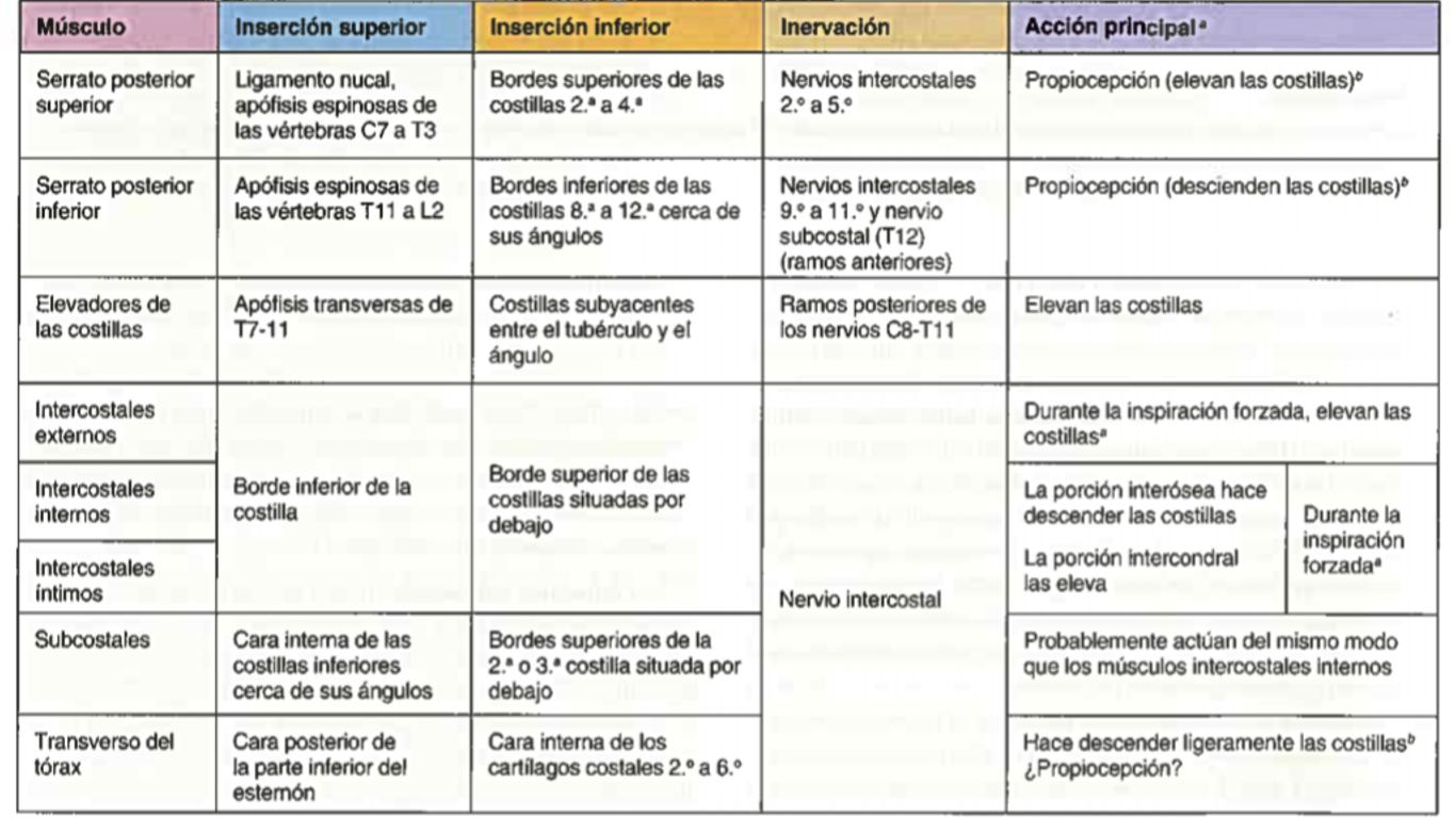 Morfofisiologia 1: TORAX