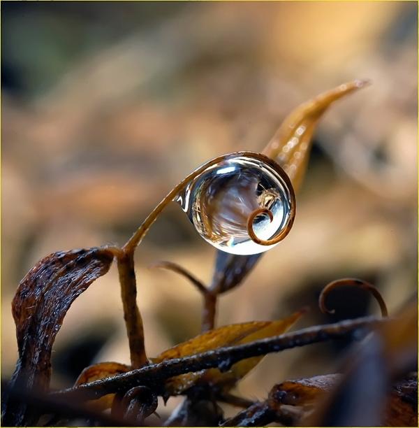 Awesome Rain drops
