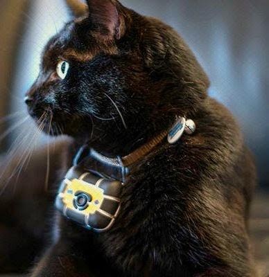 Камера на ошейник животного