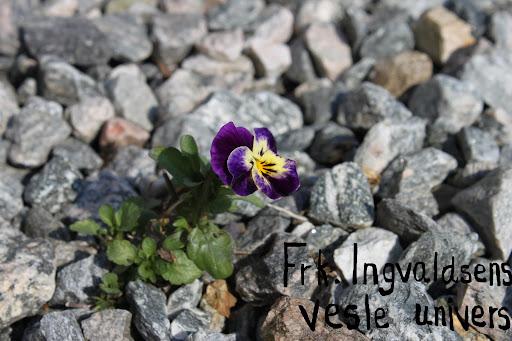 Frk. Ingvaldsens vesle univers