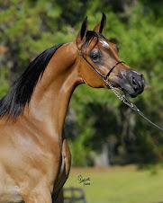 Scottsdale Horse Show