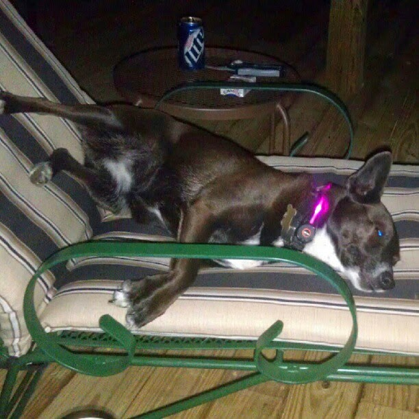 Lois Lane Chilling with Her New LED Collar