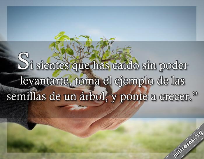 Si sientes que has caído sin poder levantarte, toma el ejemplo de las semillas de un árbol, y ponte a crecer. frases, dichos y palabras de superación