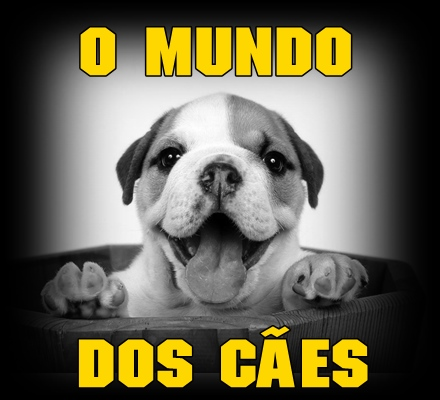 dog animal - mundo cachorro - sorriso na web