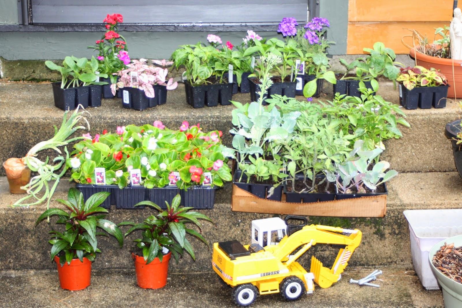 garden annuals plants